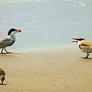 Tern Talk by AnneDB