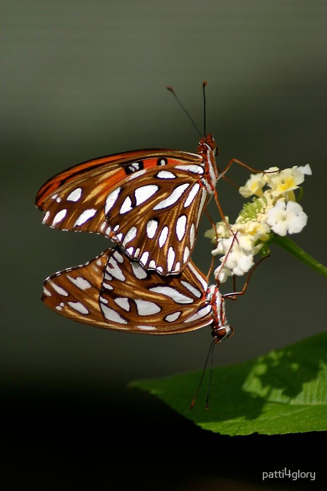 Butterfly Symmetry by patti4glory