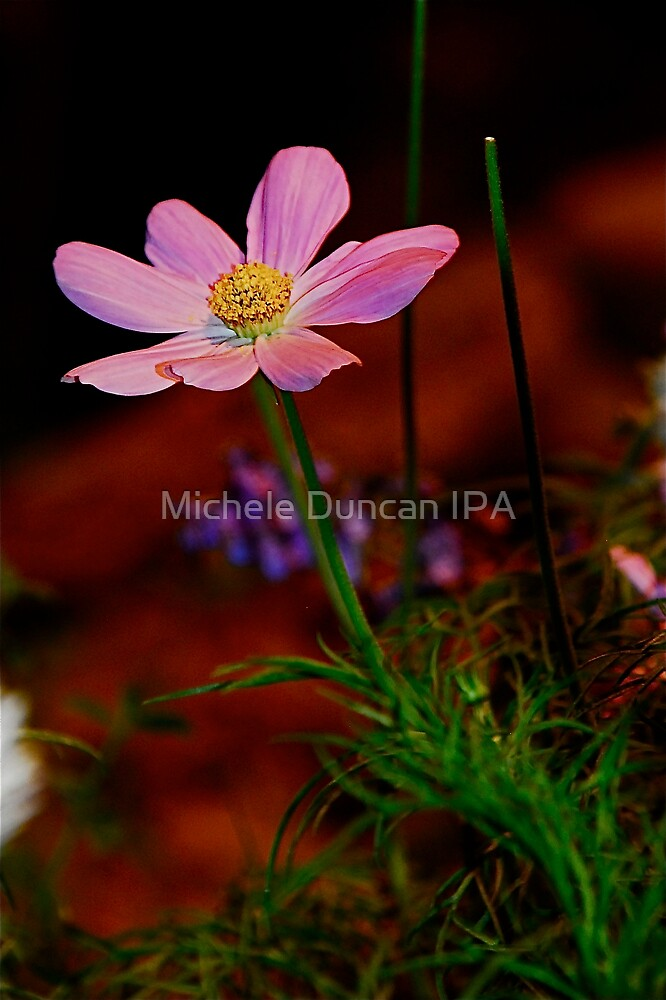 Pretty In PInk by Michele Duncan IPA