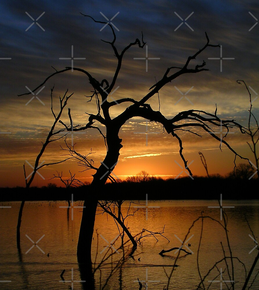 Dawn Breaking by Mark Rogers