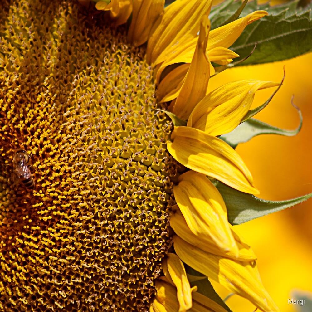 Sunshine by Margi