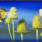 Giant Swallowtail with Multiple Teasels by Deb  Badt-Covell