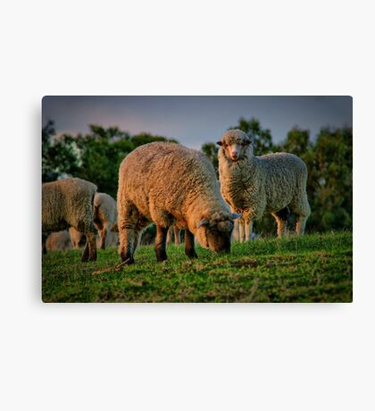 """""""The Call of the Shepherd"""" Canvas Print"""