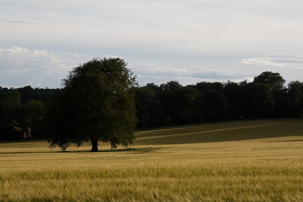 English Countryside by craigpuremac
