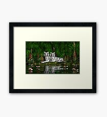 Pair of White Tigers Framed Print
