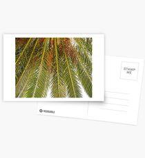 Unter der Palme Postkarten