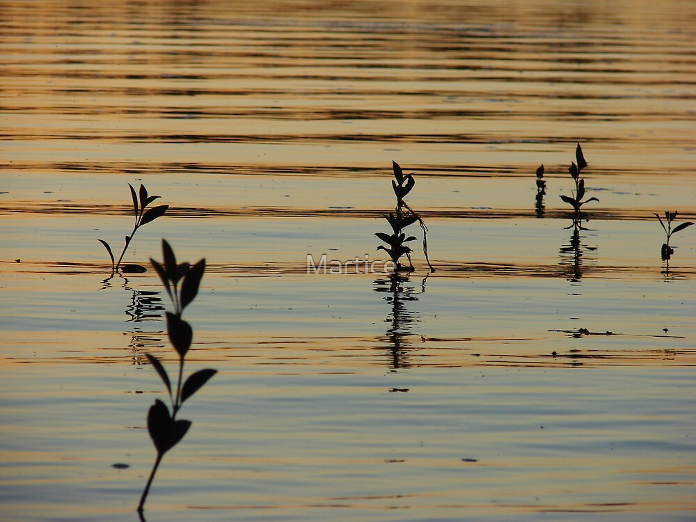 Orange Mangrove Leafy Sunset Ripples by Martice
