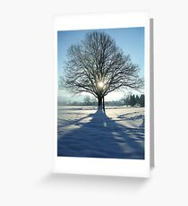 coronation tree Greeting Card