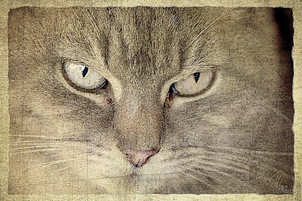 Macy Grey by Margi