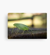 Leaf Insect Canvas Print