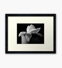 Gardenia in coffee cup Framed Print