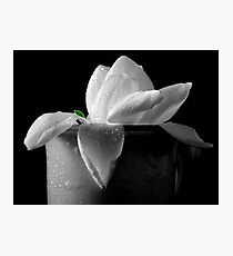 Gardenia in coffee cup Photographic Print