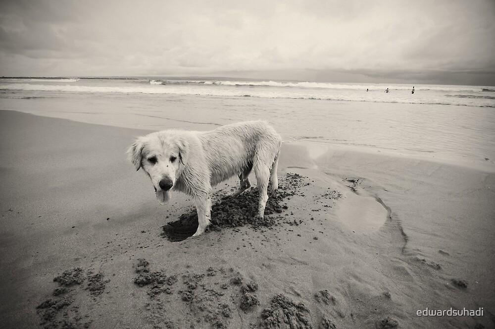 Beach Digger by edwardsuhadi