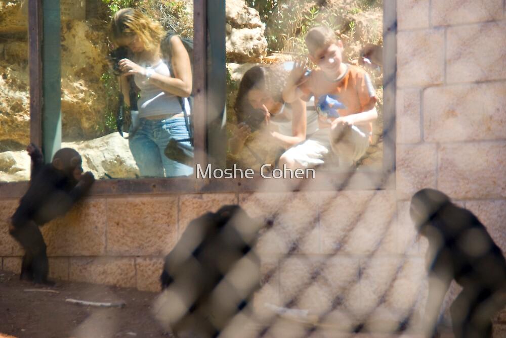 Paparazzi by Moshe Cohen