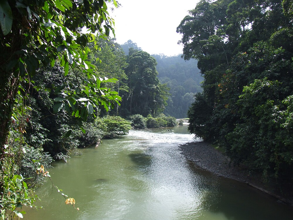 Danum Valley - Borneo by David Meyer