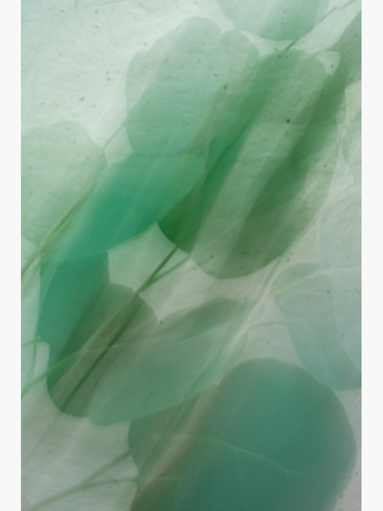 Fleur Blur Series-Abstract Eucalyptus Leaves by AhUmDesign