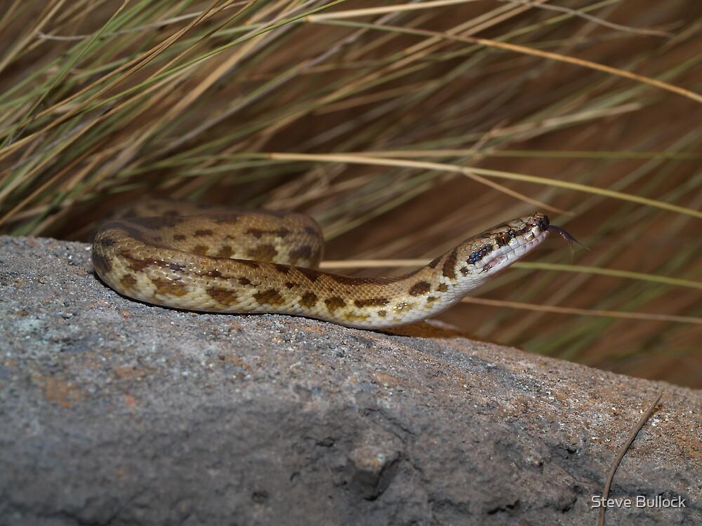 Spotted Python by Steve Bullock