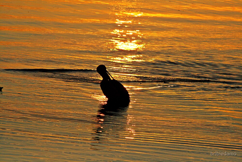 Pelican at Sunset by bribiedamo