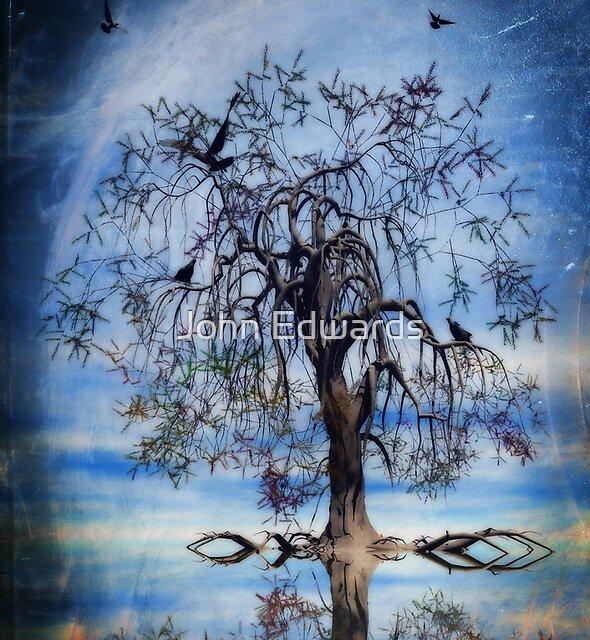 The wishing tree by John Edwards