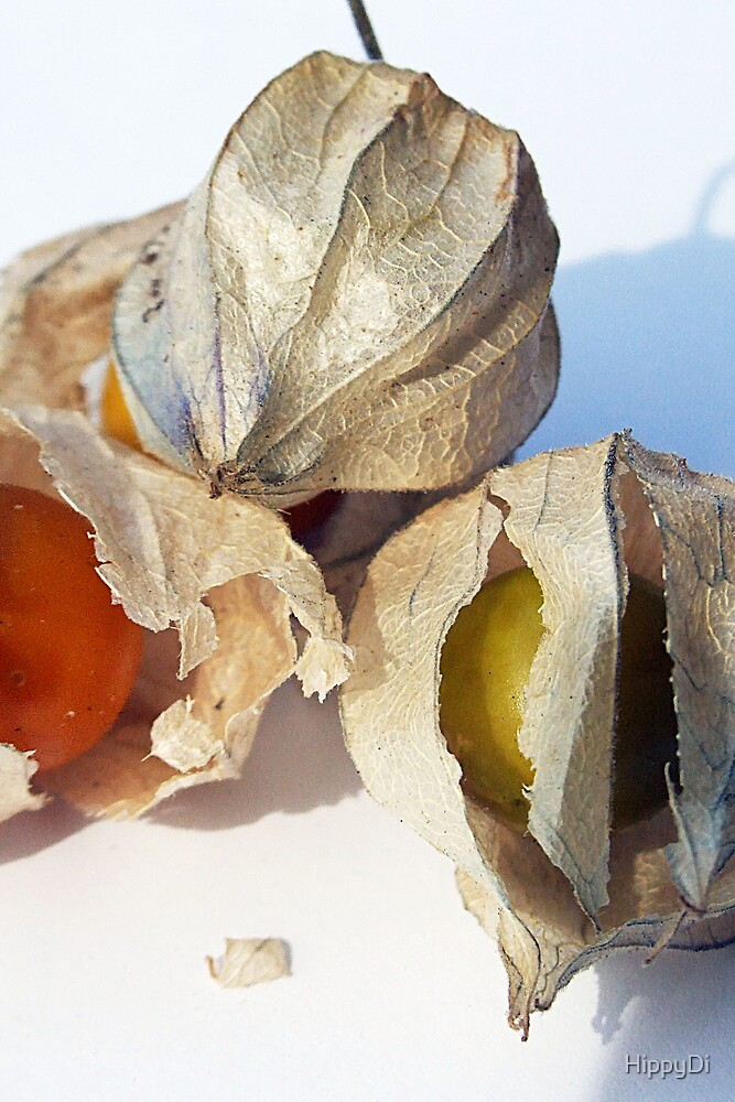 Cape Gooseberry by HippyDi