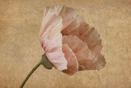 Parchment by John Edwards