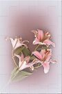 Lilies in Pink by Elaine Teague