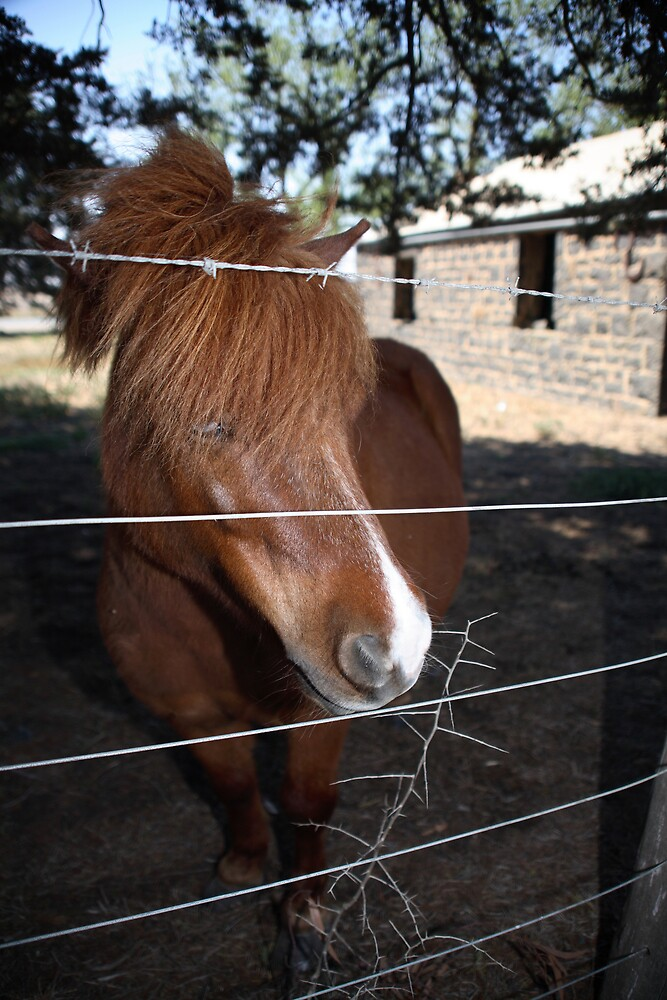 pony by sdks