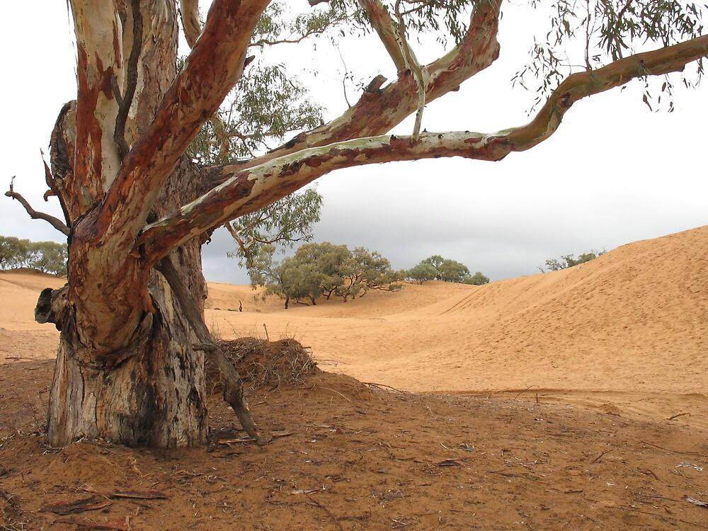 Barren Land by monikajean