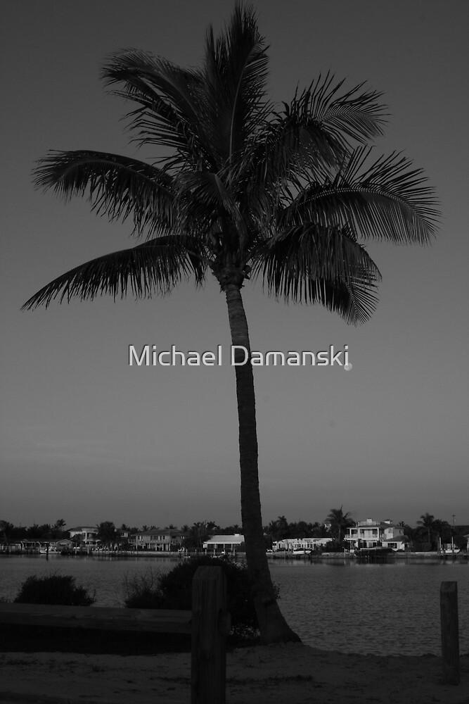 The Palm by Michael Damanski