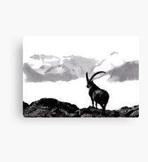 Steinbock Canvas Print