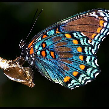 Fly Butterfly...............  by bamagirl38