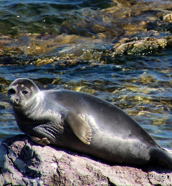 Baikal Seal by karina5