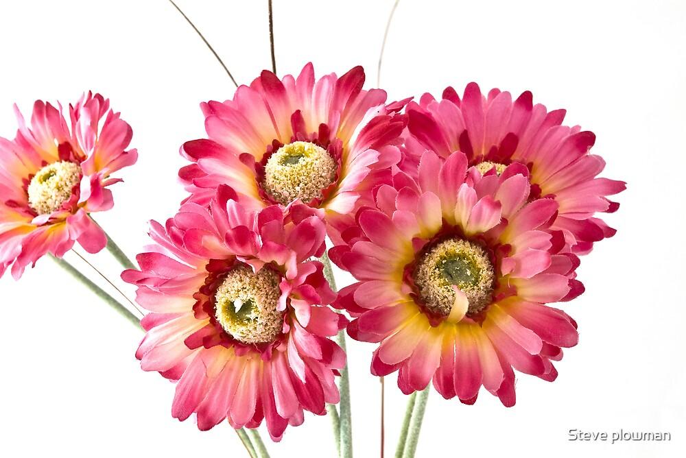 Secret Flower 2 by Steve plowman