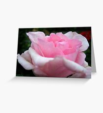 """Blushing Beauty"" Greeting Card"