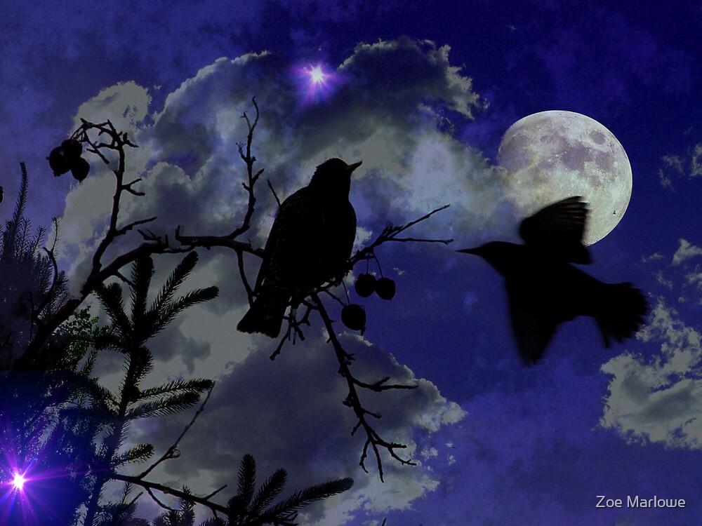Night Birds by Zoe Marlowe