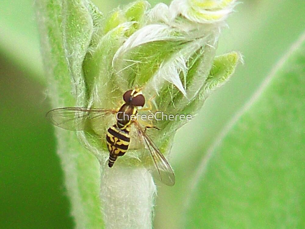 Little WASP by ChereeCheree