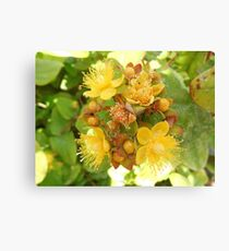 Fruits of Summer Canvas Print