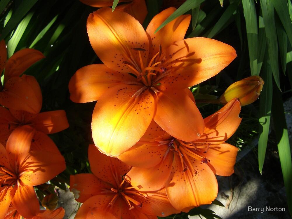 Sunny Orange by Barry Norton