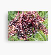 Elderberry Canvas Print