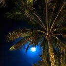 Moonlit Palms by peaceriverphoto