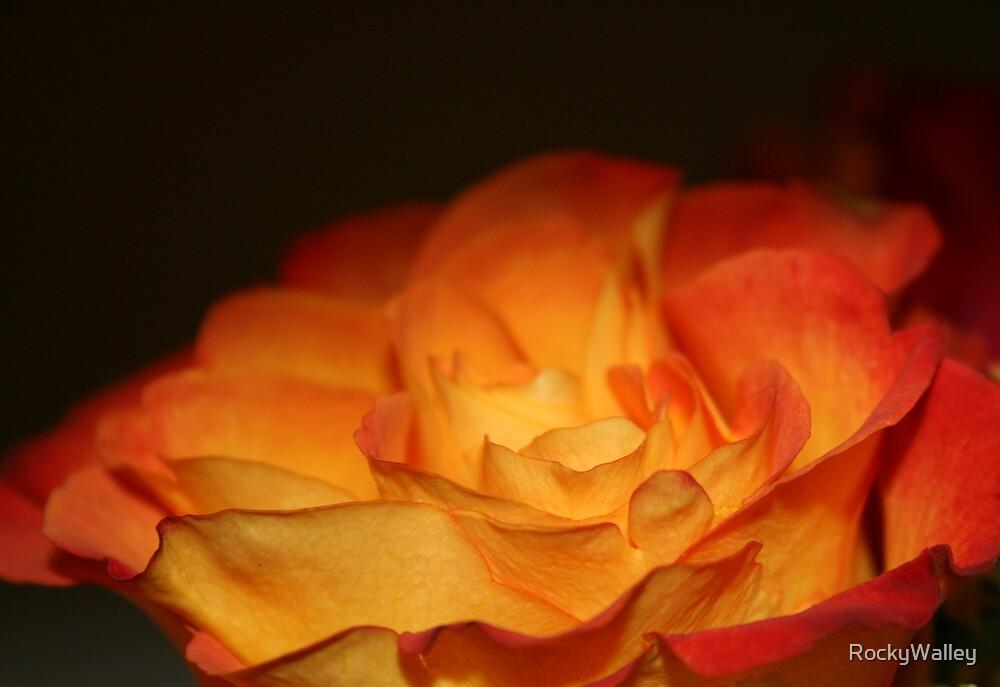Orange Firery Rose by RockyWalley