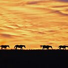 Under a Red Sky by Lisa Miller