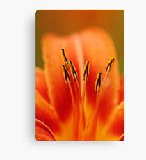 Wild Orange Lily Canvas Print