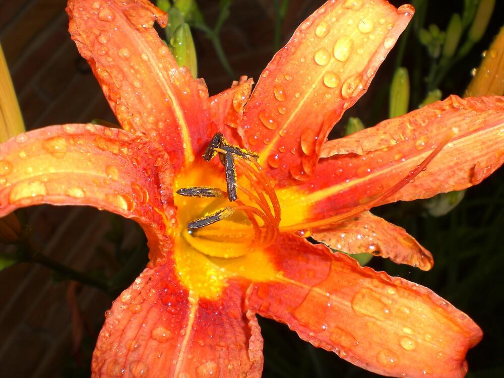 the rain creates wonderful things by Ellaine Walker
