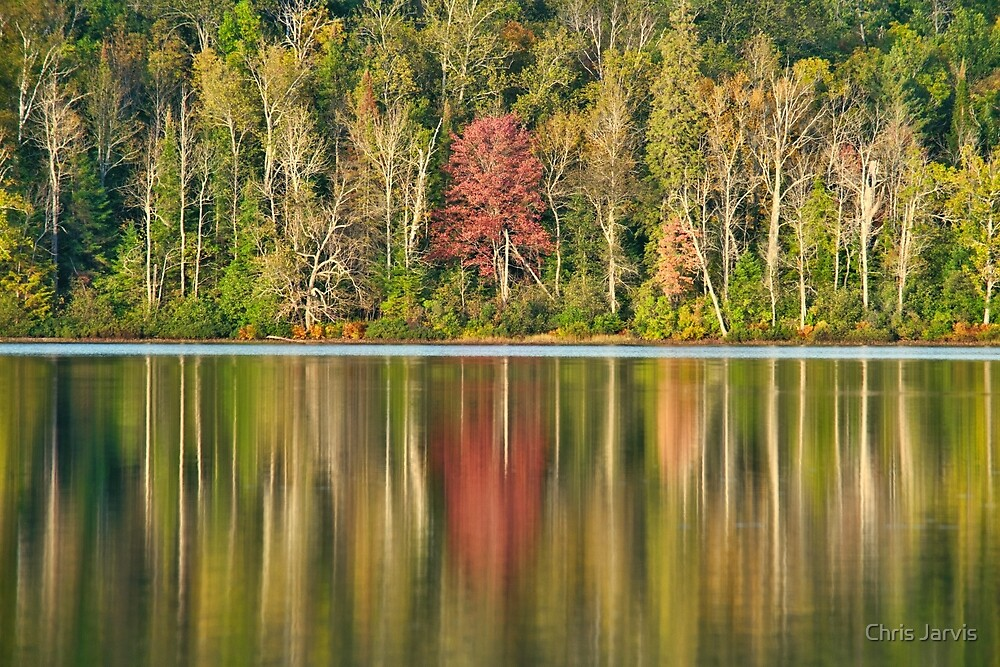 Reflections by Chris Jarvis