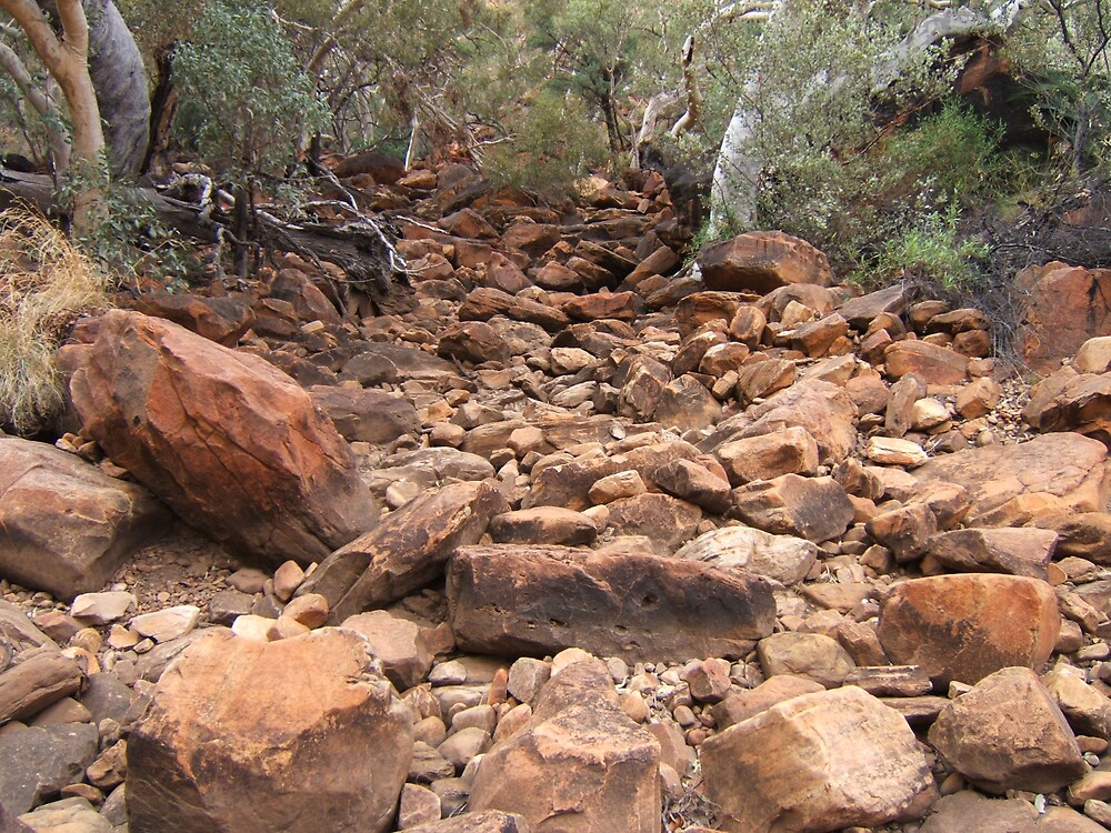 Gums and red rocks by John Witte