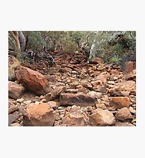 Gums and red rocks Photographic Print