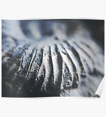 Ammonite Dunes// Nature // Fossil // Photography Poster