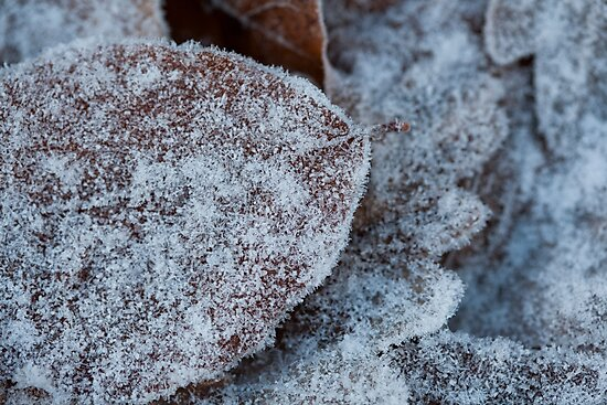 frosted by codaimages