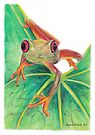 Red-Eye Green Tree Frog by Meaghan Roberts